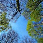 Les arbres ressemblent plus aux humains qu'on ne le pense (B1)