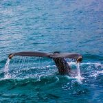 Une baleine au port de Marseille (B1)